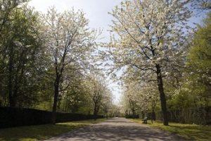Bloesem Herdenkingspark Westgaarde