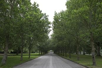 Laan met bomen westgaarde